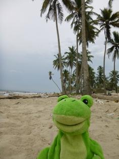 Froggy_Palmeras_2