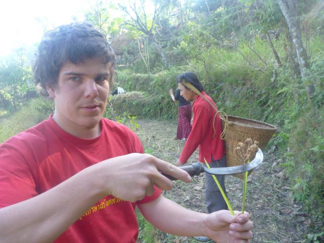 Adrien coupe le millet