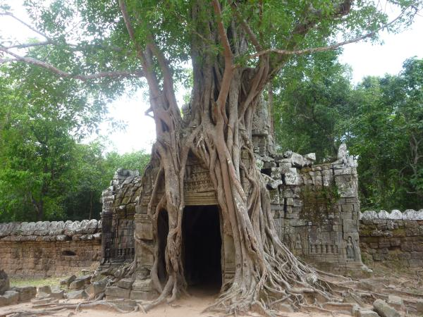 P1100386 - Temples d'Angkor