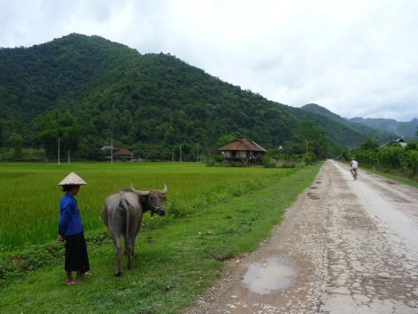 P1100834 nord vietnam campagne