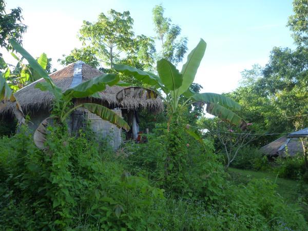 P1110196 jungle thailande