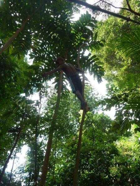 La forêt à Vanimo