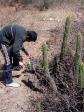 imag0146 Degustation de Cactus