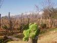 Guizmo dans les vignobles les plus haut du monde : 2000 metres d altitude