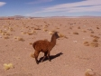 imag0645 Desert d´Atacama a la frontiere