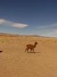 imag0646 Desert d´Atacama a la frontiere