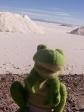 imag0672 Desert de sel