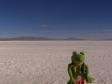 imag0674 Desert de sel