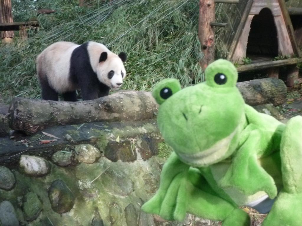 p1070485 - Guizmo rencontre les pandas