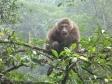 p1060938 - Emeishan, macaques dans la jungle