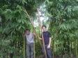 p1070312 - Deux drôles de pandas dans la forêt de bambou !