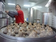 p1070428 - Hummm, les bons dumplings