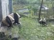 p1070453 - Pandas