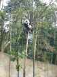 p1070467 - Pandas