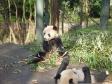 p1070488 - Pandas