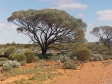 imag0568 Vegetation dans l'outback