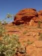 imag0784 King Canyon