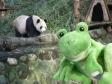 p1070485 - Guizmo chez les pandas