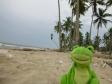 froggy_palmeras_1