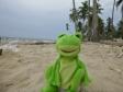 froggy_palmeras_3