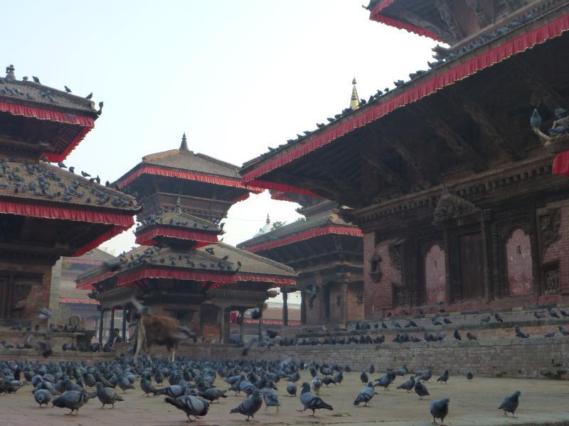 La Durbar Square : la place principale et historique où les rois successifs ont fait construire des temples pour montrer leur puissance aux autres royaumes de la vallée de Katmandou (Patan et de Baktapur). Aujourd'hui envahie par les pigeons et par quelques vaches sacrées !