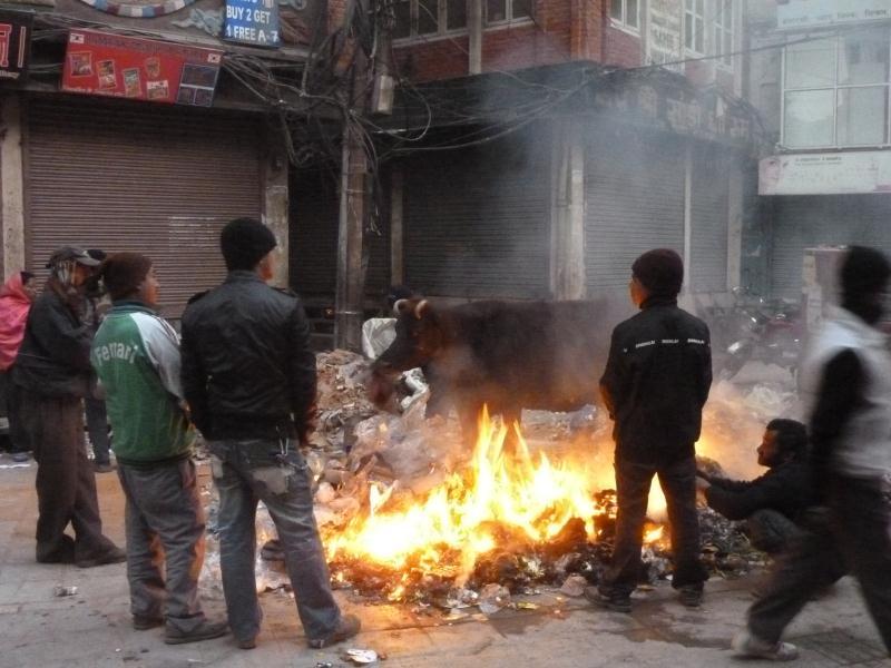 Non, non, on ne brule pas les vaches sacrées c'est interdit ! Cette vache cherche seulement quelques morceaux de cartons à manger aux milieu des déchets qui brulent (le principal moyen de recyclage...). Le soir, les Népalais se regroupent autour des feux dans la rue pour discuter et se réchauffer.