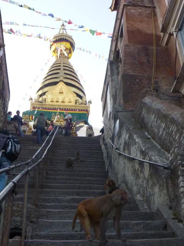 L'arrivée en haut de la colline du temple des singes se fait... au milieu de dizaines de singes !