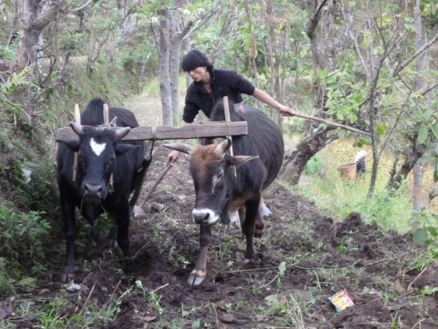 Labourer au Népal