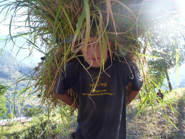 Julien transporte l'herbe